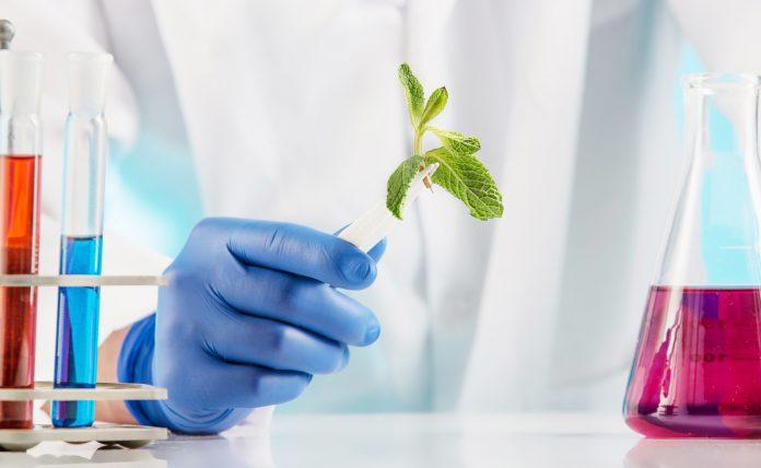 Plant sciences in lab